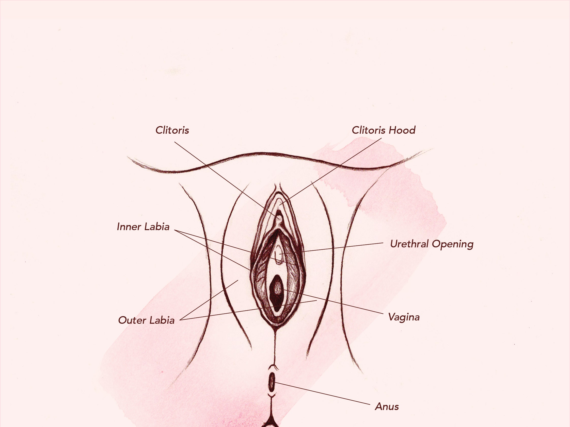 Vaginas 101 Everything You Need To Know About The Vagina Teen Vogue