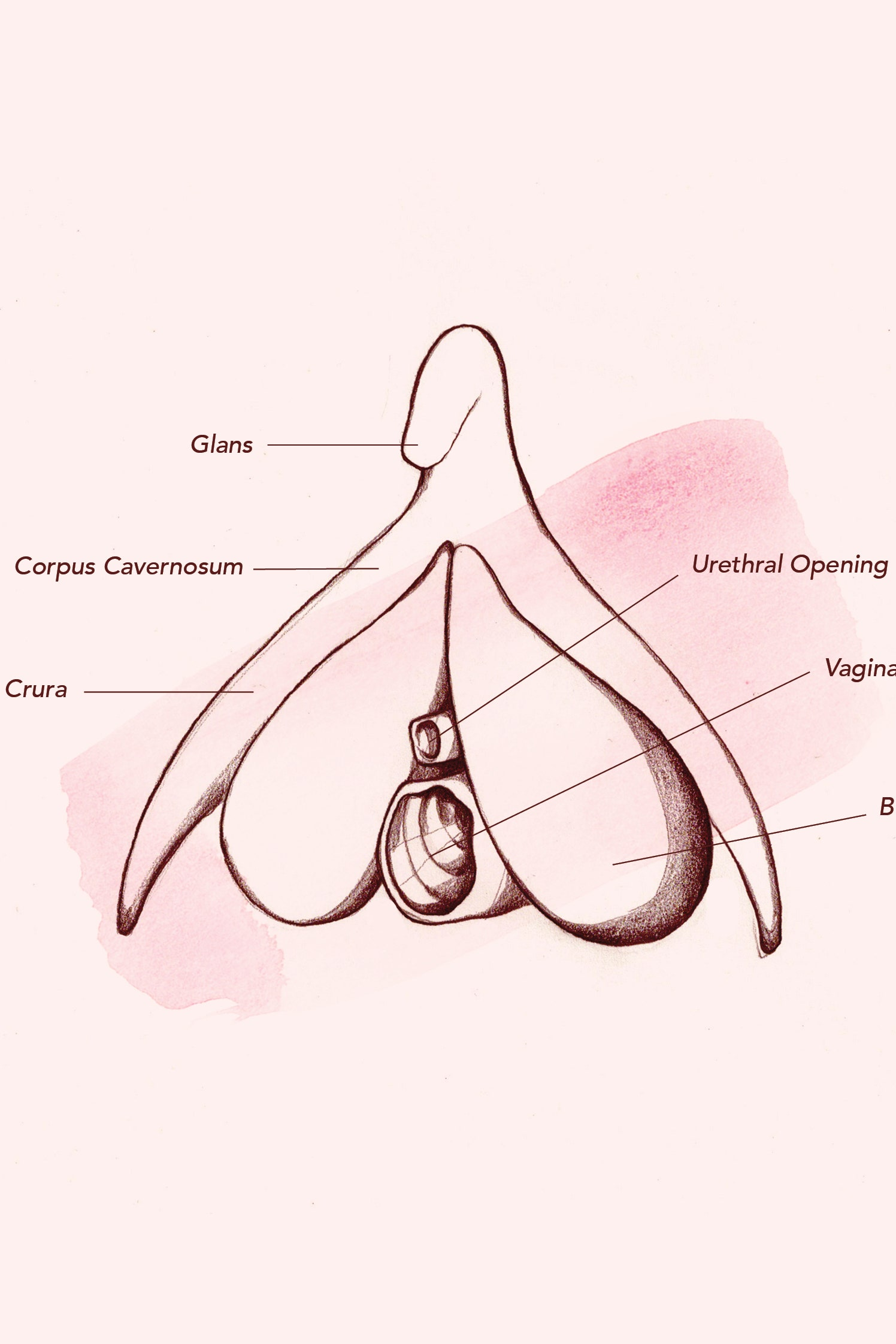 diagram female vagina